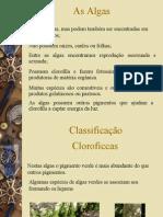 Biologia PPT - Botânica - Os Vegetais