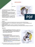 ANATOMIA ARTICULACIONES.docx