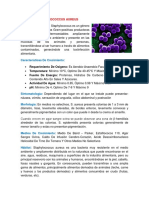 BACTERIA STAPHYLOCOCCUS AUREUS.docx