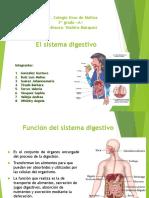 El sistema digestivo - copia.pps