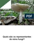 Biologia PPT - Maxi - Fungos