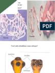 Biologia PPT - Platelminto e Nematelmintos