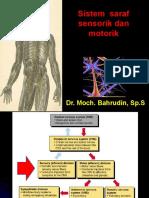 sistem saraf motorik sensorik.ppt