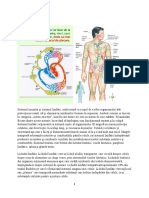 sistem limfatic.docx