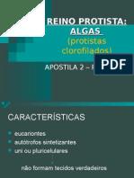 Biologia PPT - Reino Protista - Algas