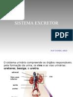 Biologia PPT - Sistema Excretor