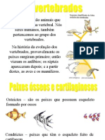 Biologia PPT - Vertebrados