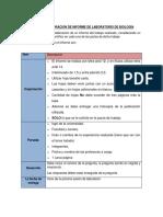 PAUTA_INFORME_TALLER.docx