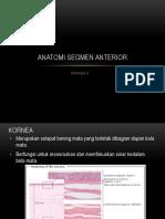 Anatomi Segmen Anterior