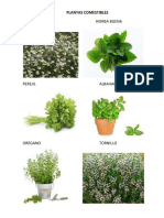 PLANTAS COMESTIBLES.docx