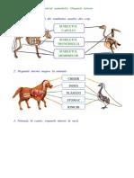 Animale schelet, organe majore.doc