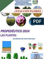1.1.RESUMEN2-BOTANICA.pdf