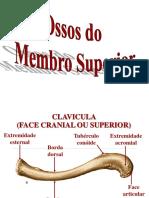 Ac. osseo do membro superior.ppt