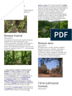 Bosque templado.docx