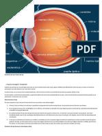 humano ojo.docx