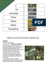 BN alerce, algarrobo, tamarugo, torba, yareta, neem, coicopihue (1).pdf
