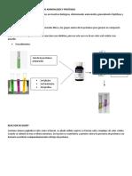 expocision laboratorio bioquimica.docx