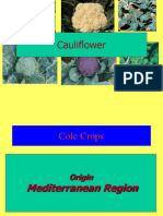 Physiological Disorders in Cole Vegetable Crops