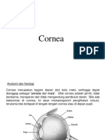Cornea 1111
