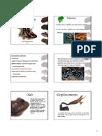 Clase electivo Anfibios.pdf
