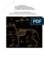 Anatomia Canina Noções Básicas (1)