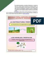 Ecologia Trofica.docx