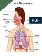 sistemas del cuerpo.docx