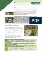 FCX-WHC Pollinator Flier