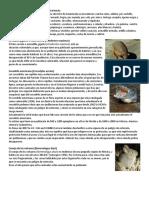 Animales en peligro de extinción en Guatemala.docx