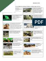 práctica tipos de adaptación.docx