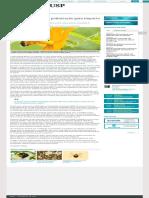 Queda Acentuada de Polinização Gera Impacto Na Agricultura