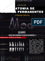 anatomiadedentespermanentes-180427154241.pdf