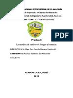 informe 5 HONGOS.docx