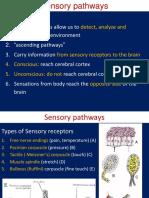 sensory  passway.ppt