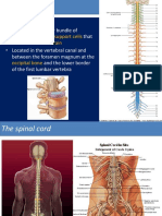 spinal-cord-ruan-2015.ppt