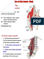 Muscles of  lower lims-ruan-2015.ppt