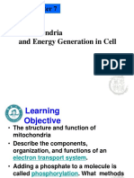 Chapter 7 - Mitochodria and energy generation.ppt