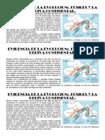 EVIDENCIA DE LA EVOLUCION.docx