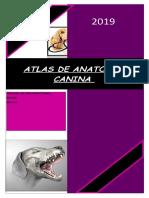 atlas.docx