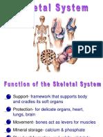 Powerpoint on Skeletal System