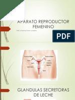 APATARO REPRODUCTOR FEMENINO.pptx