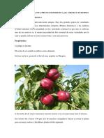 INFORME DE LA PLANTA PRUNUS DOMESTICA - copia.docx