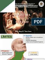 CUELLO_VERANO_1.pdf