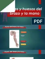 brazo-u-mano-001 (1).pptx