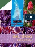 Monera Protista Fungi