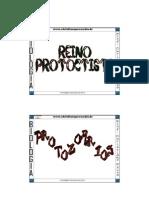 Biologia - Reino Protoctista