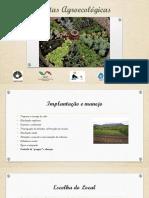 Hortas Agroecológicas 3