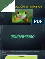 Diapositivas ciencias.pptx