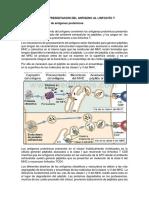 Procesamiento y Presentacion Del Antigeno Al Linfocito t