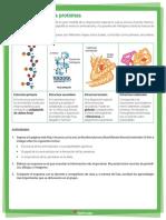 La Estructura de Las Proteínas
